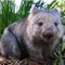 see Wombat48 profile