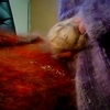 I love to masterbate in mohair