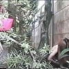 Japanese outdoor masturbating